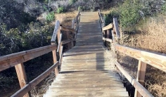 The celebrity trail of Runyon Canyon is a famous one in LA