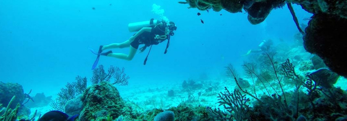 Where To Go Scuba Diving In Los Angeles Lyvly Bee