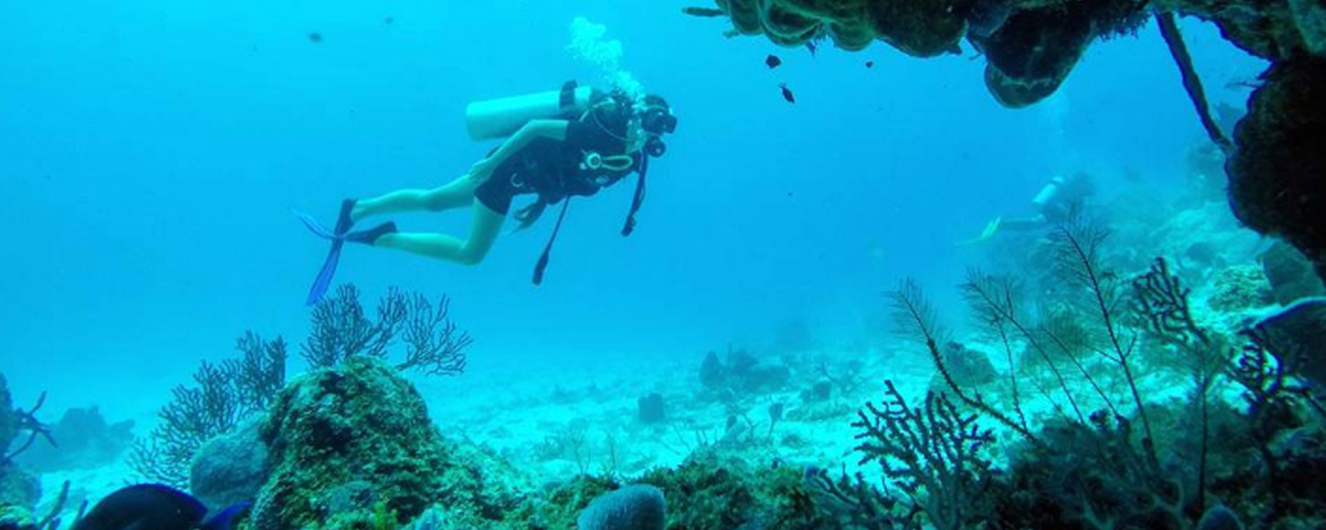 scuba diving in north america essay Getting certified is crucial before attempting a dive, and if you choose to give it a go, we've compiled some of the best dive sites in north america for you to visit.